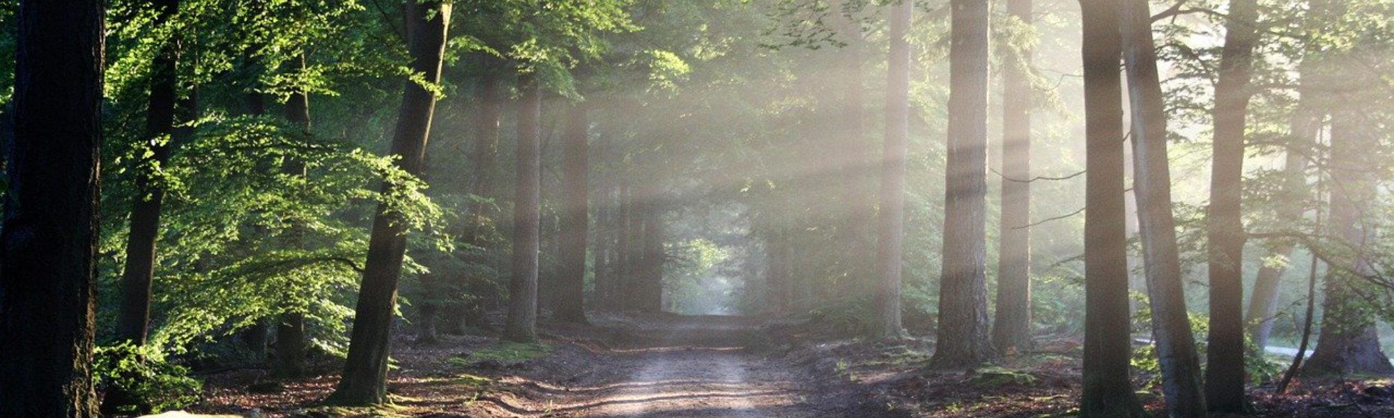 Heilpraktikerin Busch - Der Weg